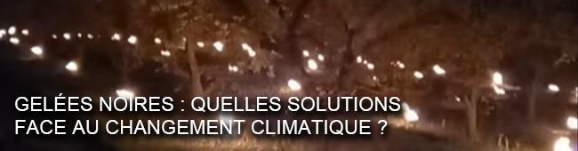 Gelées noires : quelles solutions face au changement climatique ?  - Show images
